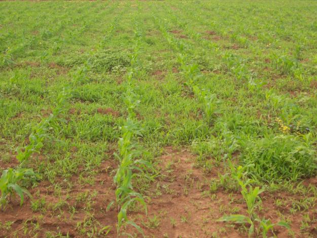 terreno,granja, finca,parcela,hectarias